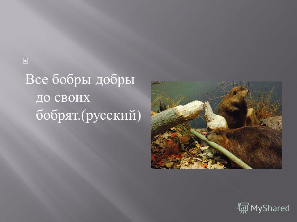 Все бобры добры до своих бобрят.( русский )