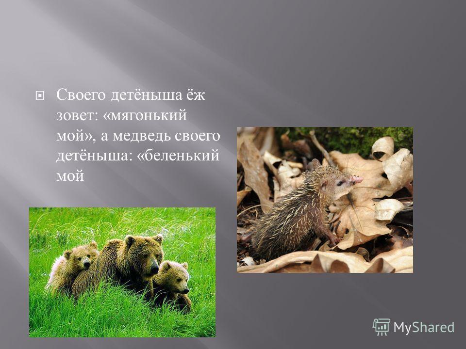 Своего детёныша ёж зовет : « мягонький мой », а медведь своего детёныша : « беленький мой