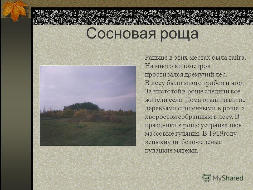 Сосновая роща Раньше в этих местах была тайга. На много километров простирался дремучий лес. В лесу было много грибов и ягод. За чистотой в роще следили все жители села. Дома отапливали не деревьями спиленными в роще, а хворостом собранным в лесу. В