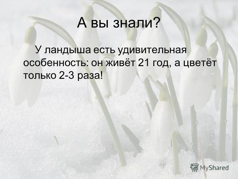 А вы знали? У ландыша есть удивительная особенность: он живёт 21 год, а цветёт только 2-3 раза!