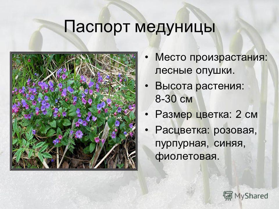 Паспорт медуницы Место произрастания: лесные опушки. Высота растения: 8-30 см Размер цветка: 2 см Расцветка: розовая, пурпурная, синяя, фиолетовая.