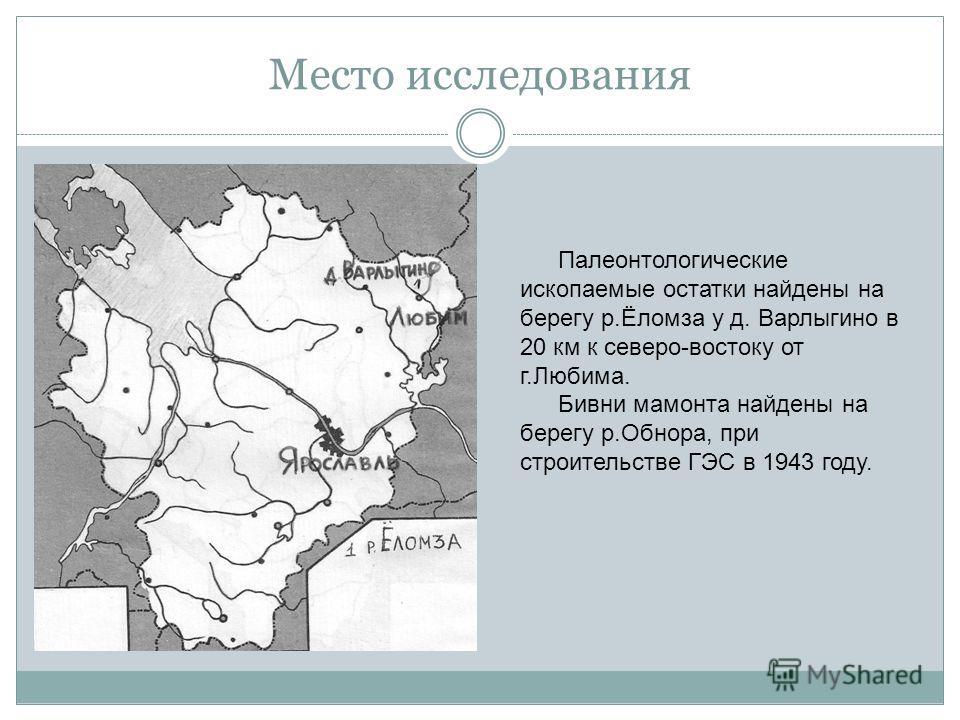 Место исследования Палеонтологические ископаемые остатки найдены на берегу р.Ёломза у д. Варлыгино в 20 км к северо-востоку от г.Любима. Бивни мамонта найдены на берегу р.Обнора, при строительстве ГЭС в 1943 году.