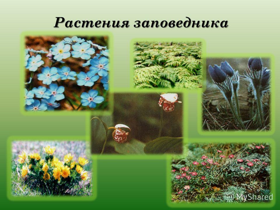Растения заповедника