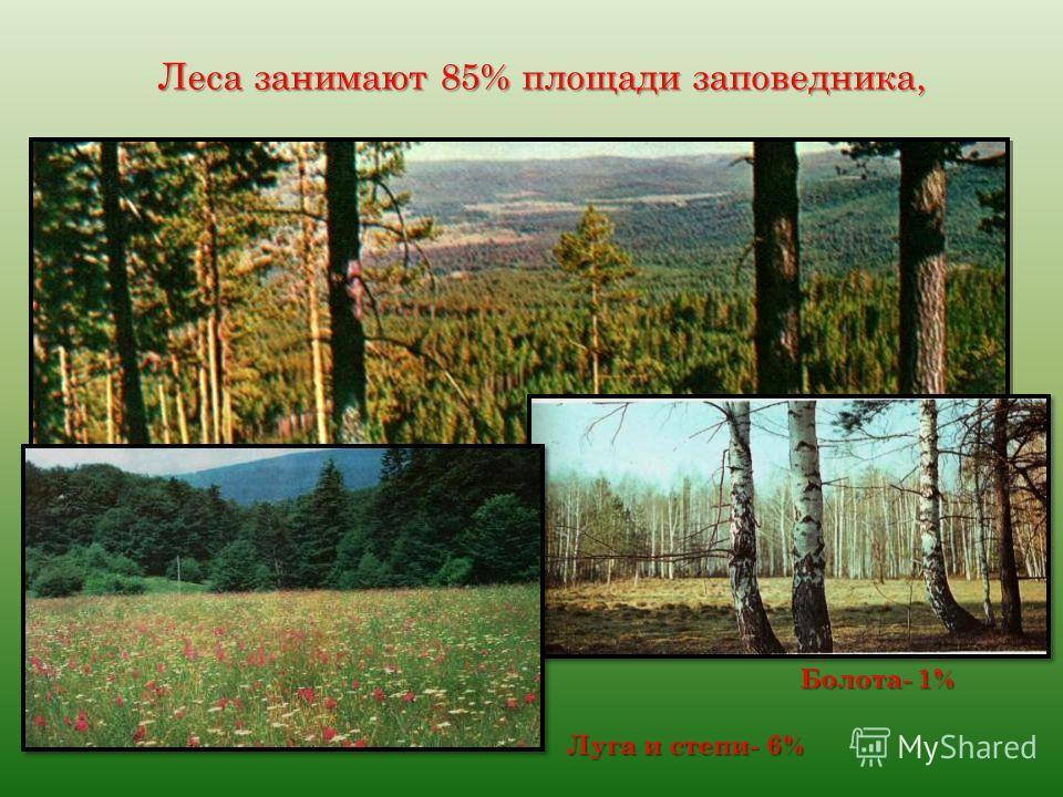 Леса занимают 85% площади заповедника, Леса занимают 85% площади заповедника, Луга и степи- 6% Болота- 1%