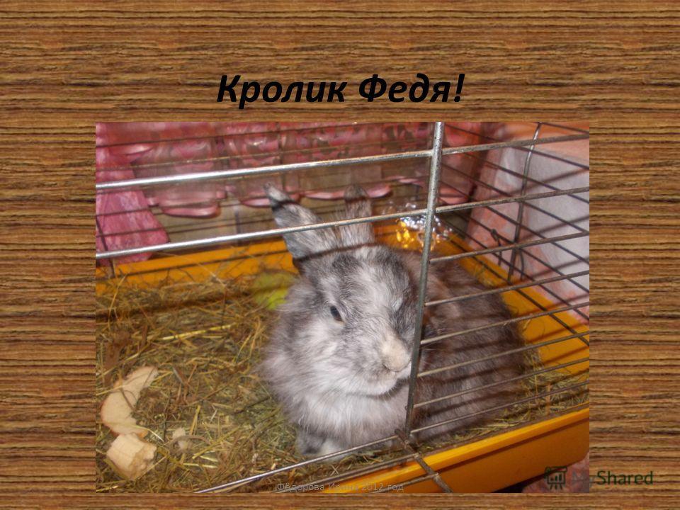 Кролик Федя! Фёдорова Ирина 2012 год