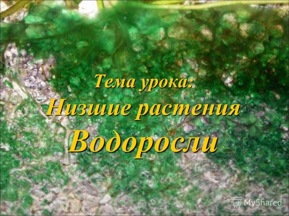 Тема урока: Низшие растения Водоросли