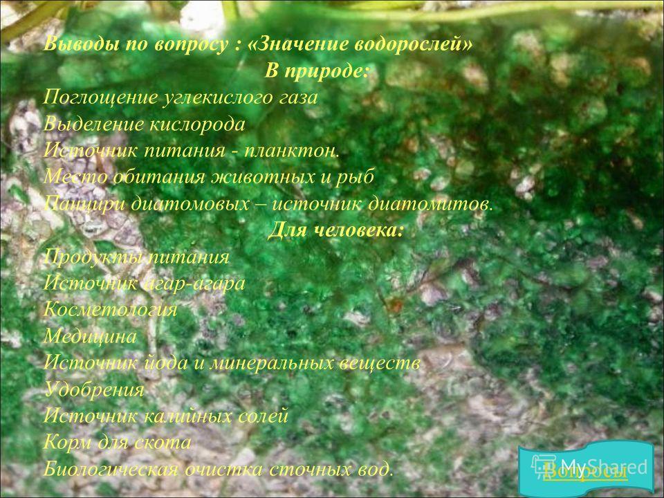 Выводы по вопросу : «Значение водорослей» В природе: Поглощение углекислого газа Выделение кислорода Источник питания - планктон. Место обитания животных и рыб Панцири диатомовых – источник диатомитов. Для человека: Продукты питания Источник агар-ага