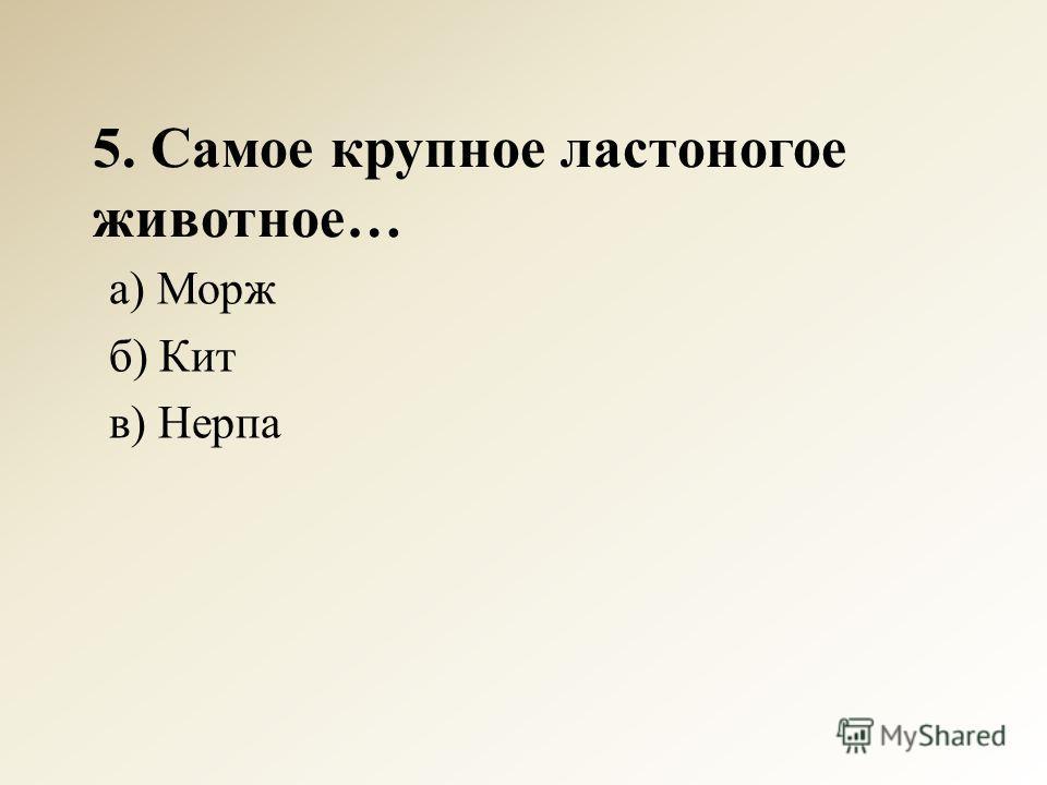 5. Самое крупное ластоногое животное… а) Морж б) Кит в) Нерпа
