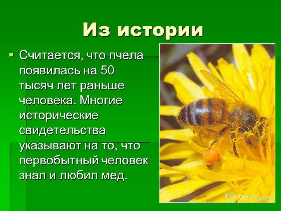 Из истории Считается, что пчела появилась на 50 тысяч лет раньше человека. Многие исторические свидетельства указывают на то, что первобытный человек знал и любил мед. Считается, что пчела появилась на 50 тысяч лет раньше человека. Многие исторически