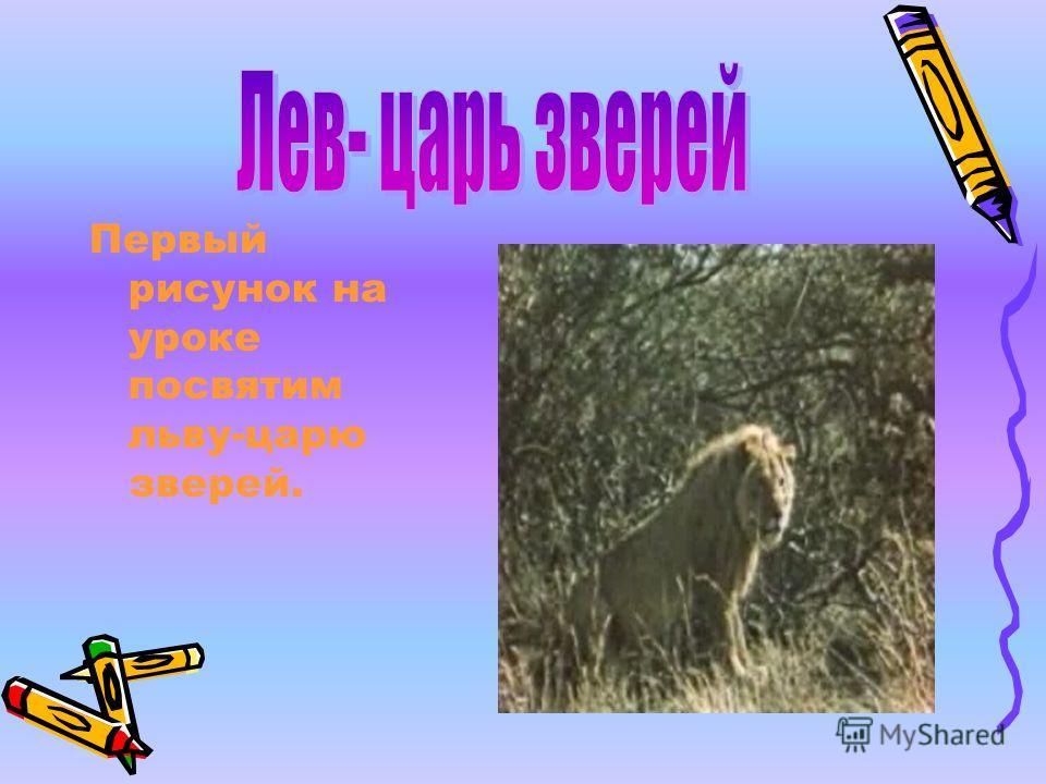Первый рисунок на уроке посвятим льву-царю зверей.
