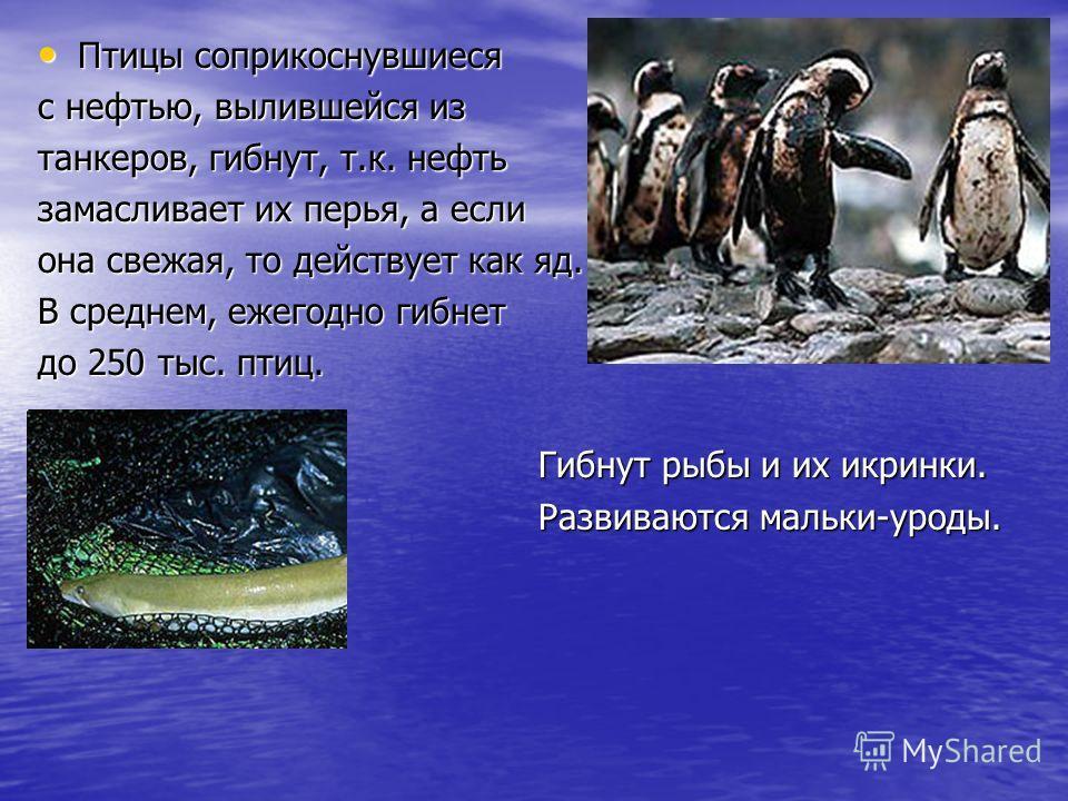 Птицы соприкоснувшиеся Птицы соприкоснувшиеся с нефтью, вылившейся из танкеров, гибнут, т.к. нефть замасливает их перья, а если она свежая, то действует как яд. В среднем, ежегодно гибнет до 250 тыс. птиц. Гибнут рыбы и их икринки. Гибнут рыбы и их и