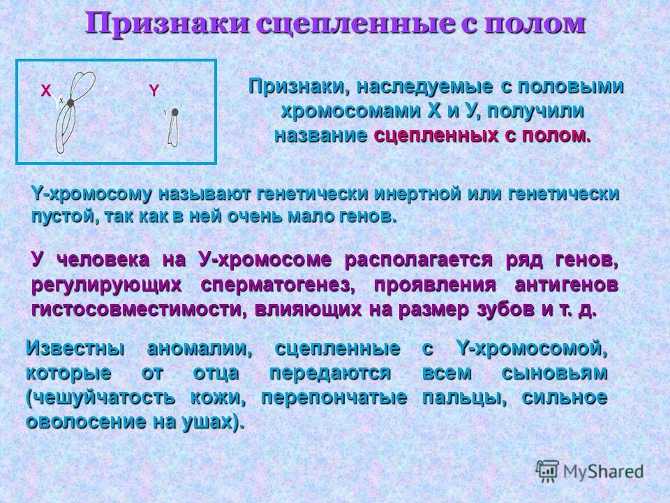 Признаки сцепленные с полом Признаки, наследуемые с половыми хромосомами X и У, получили название сцепленных с полом. Y-хромосому называют генетически инертной или генетически пустой, так как в ней очень мало генов. У человека на У-хромосоме располаг