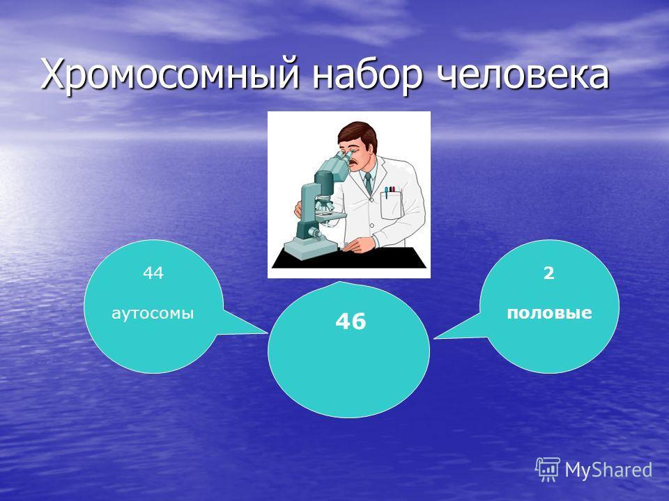 Хромосомный набор человека 44 аутосомы 46 2 половые