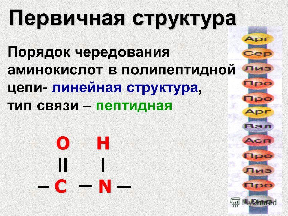 Первичная структура Порядок чередования аминокислот в полипептидной цепи- линейная структура, тип связи – пептидная О Н О Н C N C N