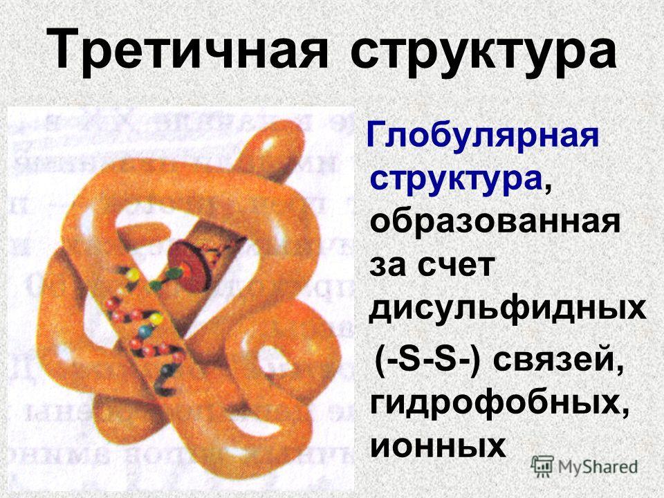 Третичная структура Глобулярная структура, образованная за счет дисульфидных (-S-S-) связей, гидрофобных, ионных