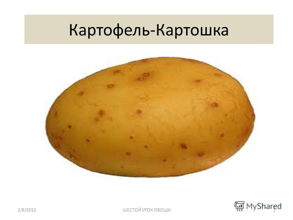 Картофель-Картошка 2/8/20121ШЕСТОЙ УРОК ОВОЩИ