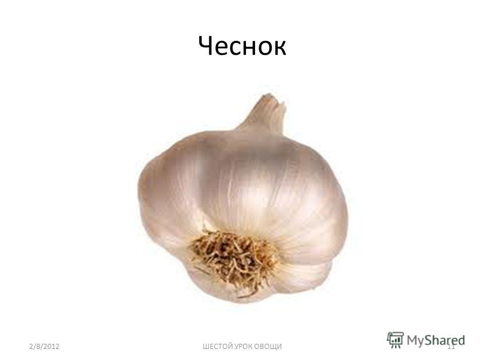 Чеснок 2/8/2012ШЕСТОЙ УРОК ОВОЩИ11