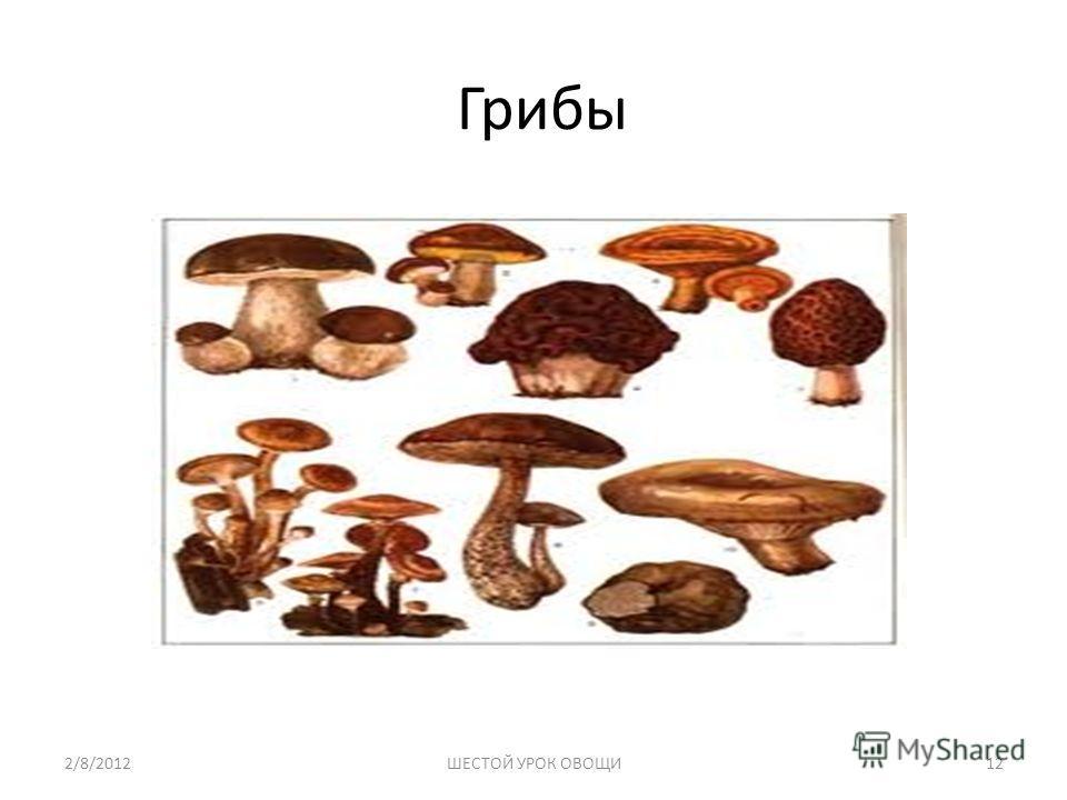 Грибы 2/8/201212ШЕСТОЙ УРОК ОВОЩИ