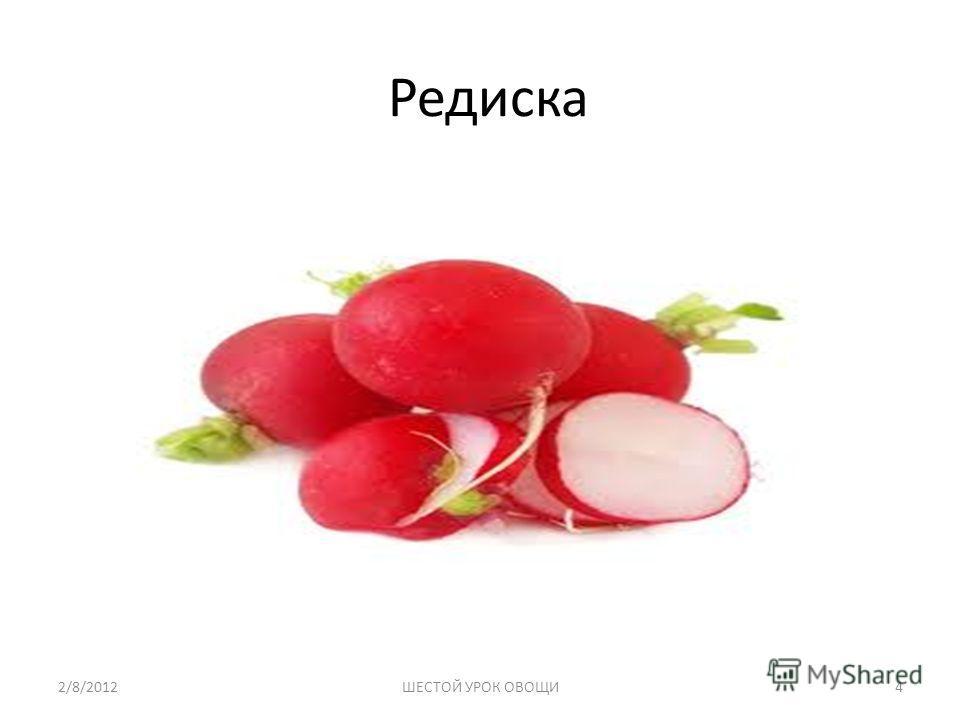 Редиска 2/8/20124ШЕСТОЙ УРОК ОВОЩИ