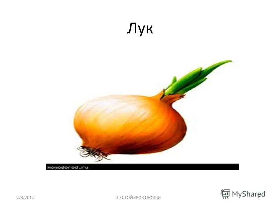 Лук 2/8/20126ШЕСТОЙ УРОК ОВОЩИ