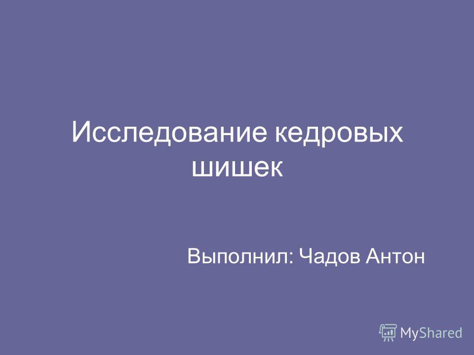 Исследование кедровых шишек Выполнил: Чадов Антон