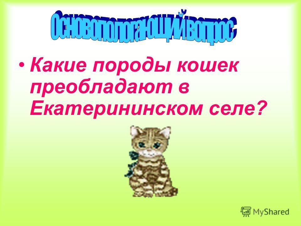 Какие породы кошек преобладают в Екатерининском селе?