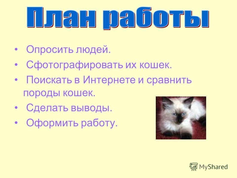 Опросить людей. Сфотографировать их кошек. Поискать в Интернете и сравнить породы кошек. Сделать выводы. Оформить работу.