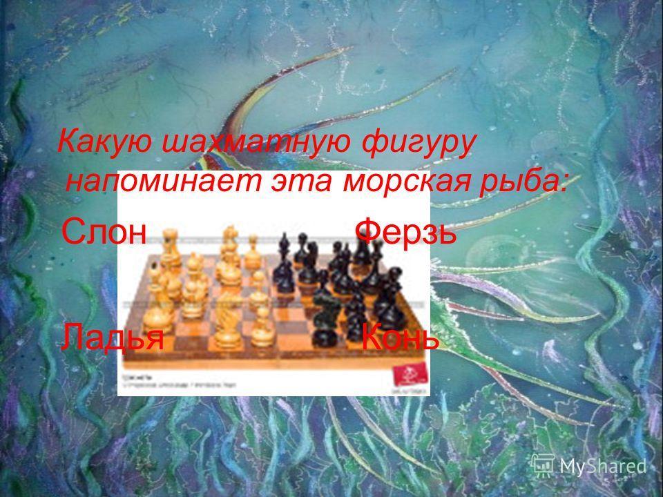Какую шахматную фигуру напоминает эта морская рыба: Слон Ферзь Ладья Конь