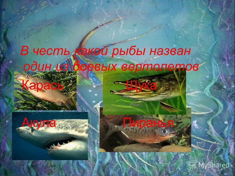 В честь какой рыбы назван один из боевых вертолетов Карась Щука Акула Пиранья