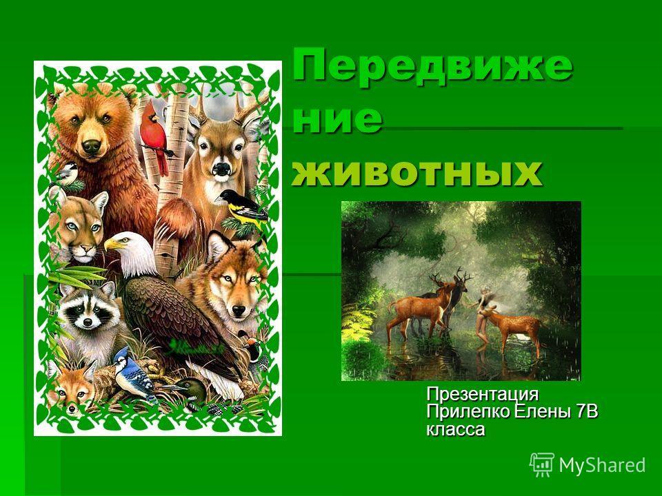 Передвиже ние животных Презентация Прилепко Елены 7В класса