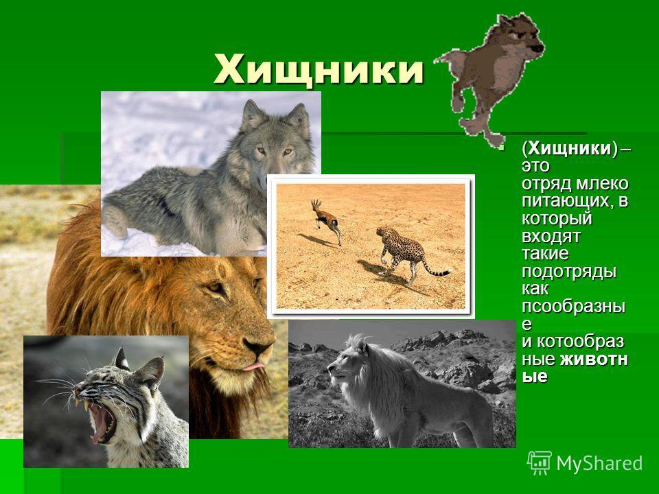 Хищники Хищники (Хищники) – это отряд млеко питающих, в который входят такие подотряды как псообразны е и котообраз ные животн ые