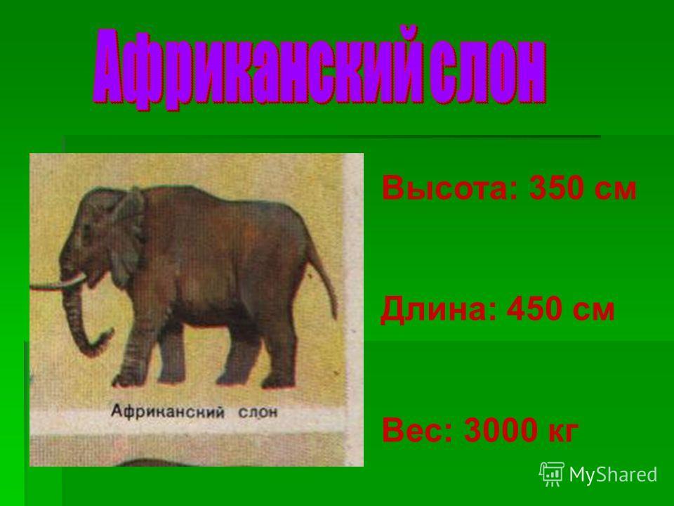 Задание 4: «Найдите высоту и длину тела африканского слона (в см) и его массу (в кг)» 125 4+ 25 - 60 100 5+ 60 ++ - 2000- 5000 см кг ВысотаДлинаМасса