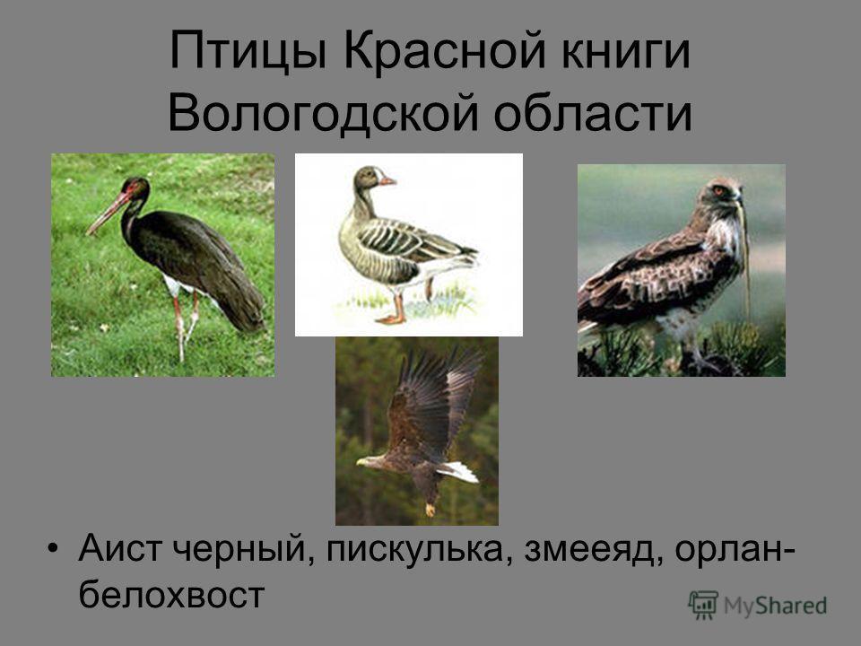 Красной книги вологодской области