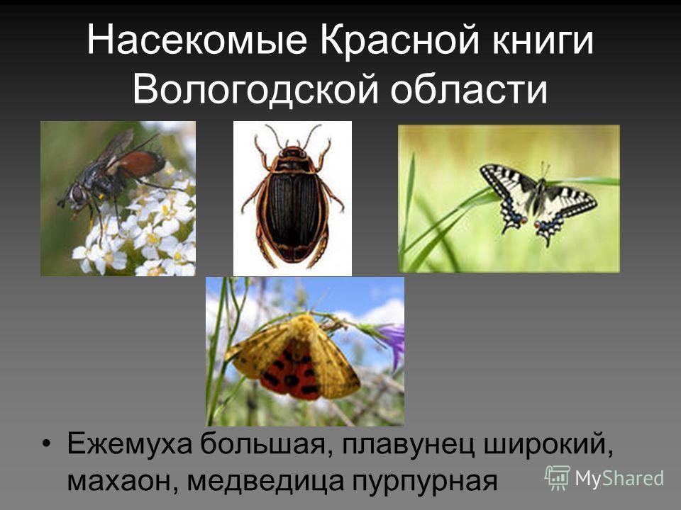Насекомые Красной книги Вологодской области Ежемуха большая, плавунец широкий, махаон, медведица пурпурная