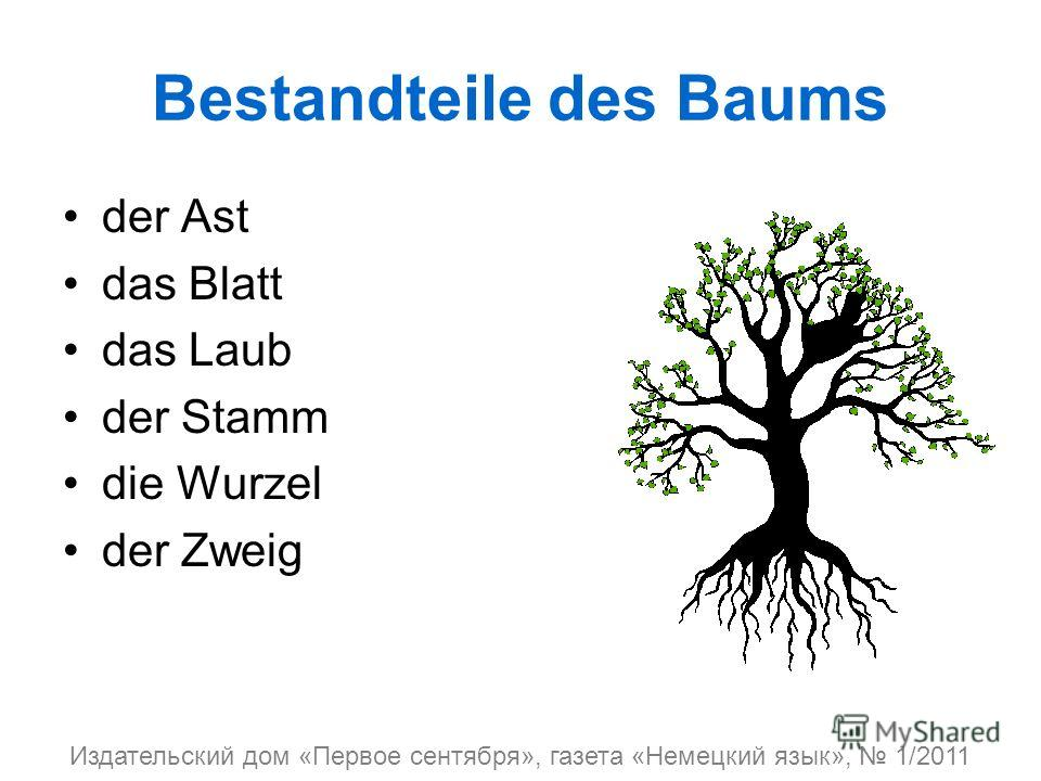 Bestandteile des Baums der Ast das Blatt das Laub der Stamm die Wurzel der Zweig Издательский дом «Первое сентября», газета «Немецкий язык», 1/2011