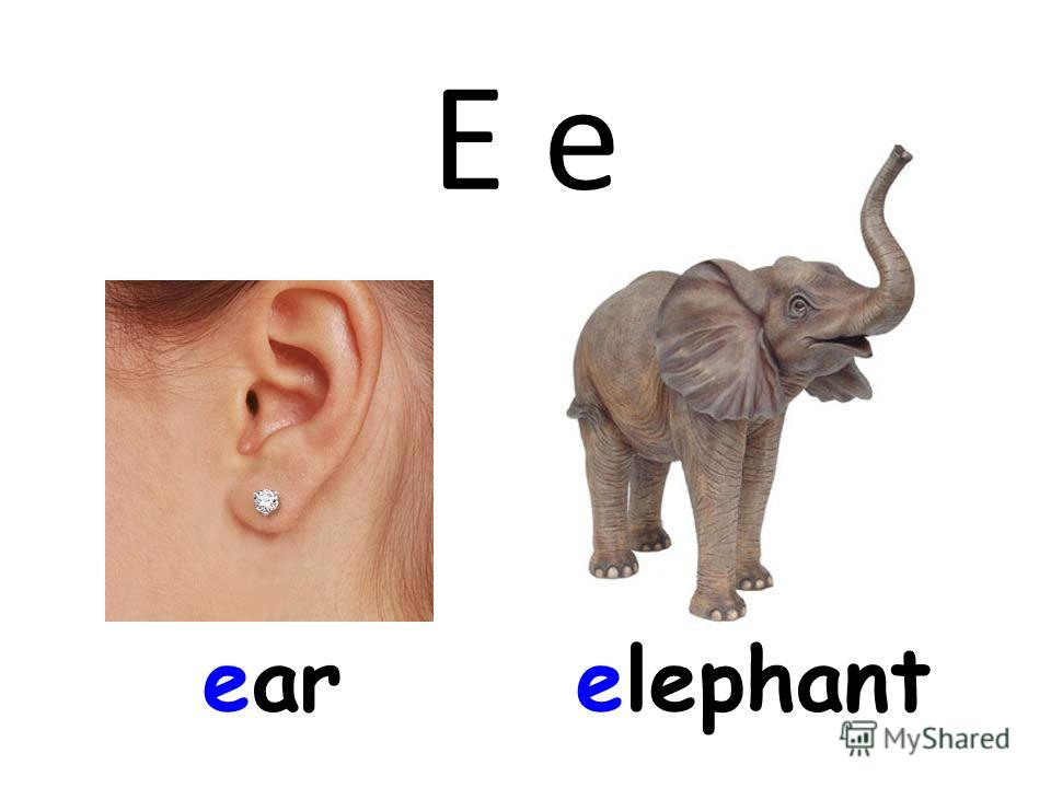 E e earelephant