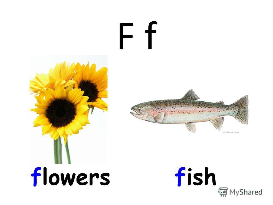 F f flowersfish