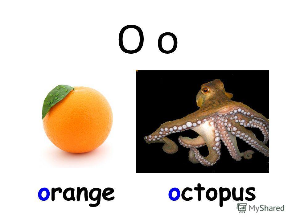 O o orangeoctopus