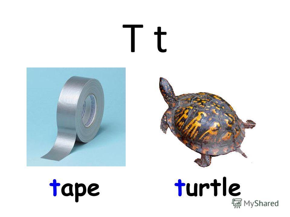 T t tapeturtle