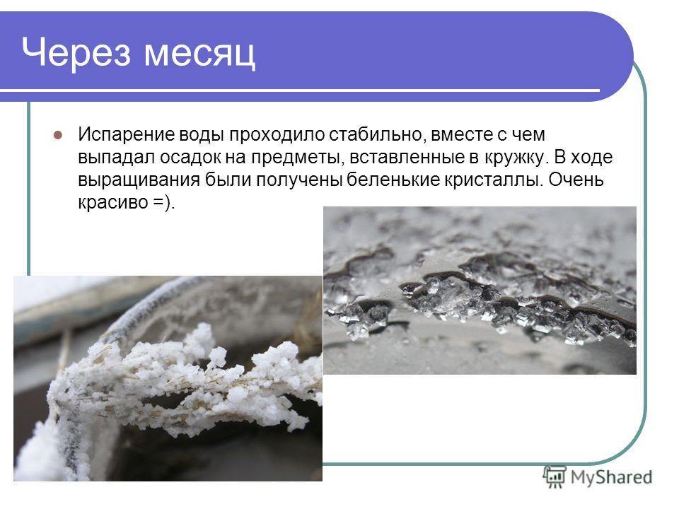 Через месяц Испарение воды проходило стабильно, вместе с чем выпадал осадок на предметы, вставленные в кружку. В ходе выращивания были получены беленькие кристаллы. Очень красиво =).