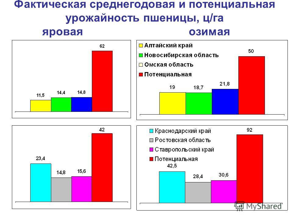 Фактическая среднегодовая и потенциальная урожайность пшеницы, ц/га яровая озимая