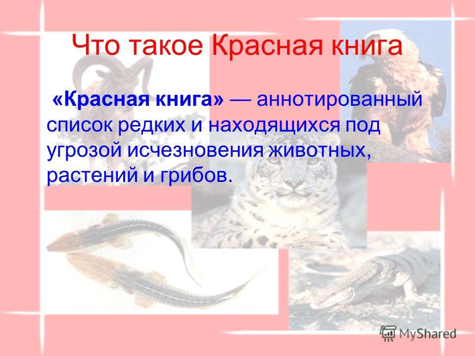 Что такое Красная книга «Красная книга» аннотированный список редких и находящихся под угрозой исчезновения животных, растений и грибов.