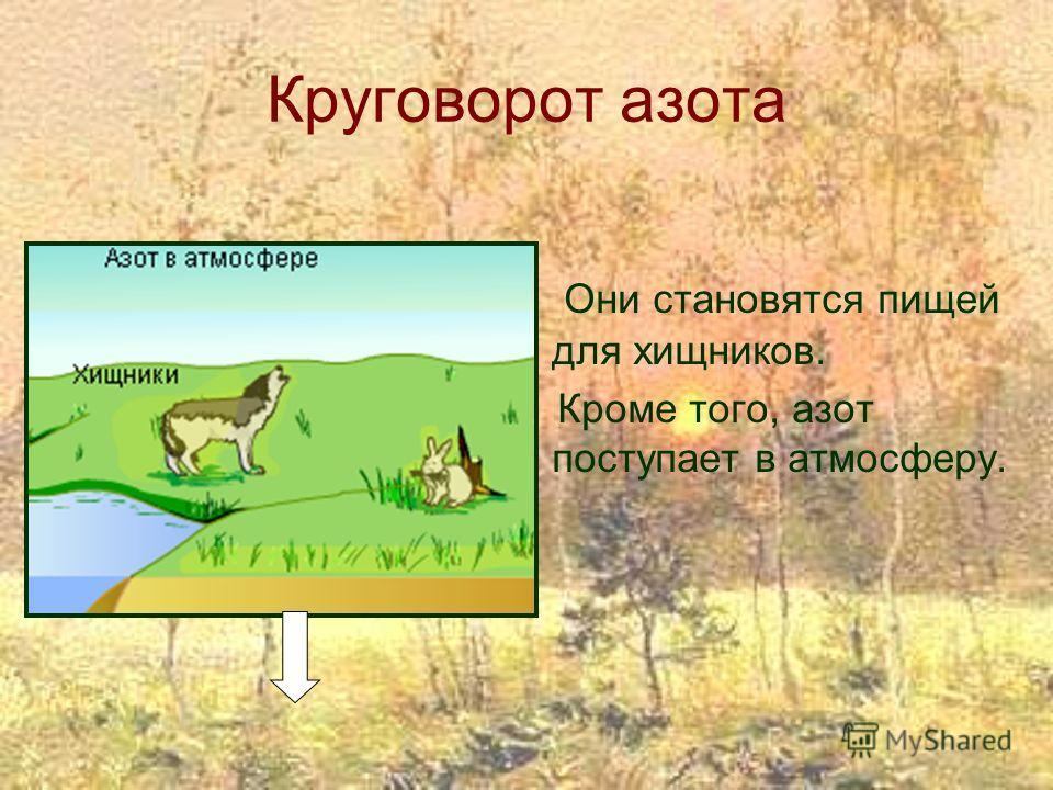 Круговорот азота Они становятся пищей для хищников. Кроме того, азот поступает в атмосферу.