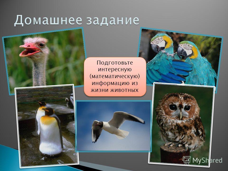 Подготовьте интересную (математическую) информацию из жизни животных