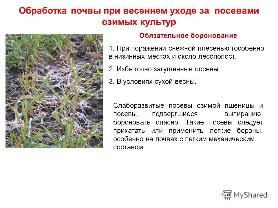 Обработка почвы при весеннем уходе за посевами озимых культур Обязательное боронование 1. При поражении снежной плесенью (особенно в низинных местах и около лесополос). 2. Избыточно загущенные посевы. 3. В условиях сухой весны. Слаборазвитые посевы о