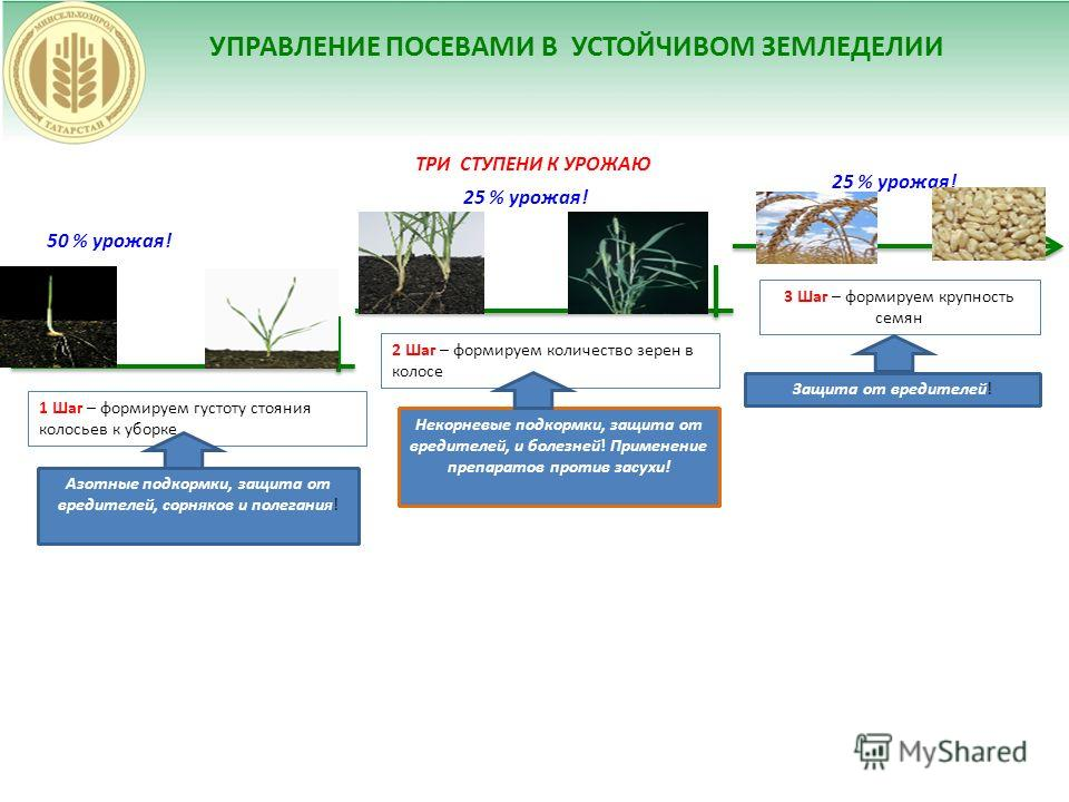 УПРАВЛЕНИЕ ПОСЕВАМИ В УСТОЙЧИВОМ ЗЕМЛЕДЕЛИИ ТРИ СТУПЕНИ К УРОЖАЮ 50 % урожая! 1 Шаг – формируем густоту стояния колосьев к уборке 2 Шаг – формируем количество зерен в колосе 3 Шаг – формируем крупность семян 25 % урожая! Азотные подкормки, защита от