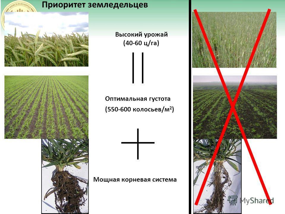 Приоритет земледельцев Высокий урожай (40-60 ц/га) Оптимальная густота (550-600 колосьев/м 2 ) Мощная корневая система