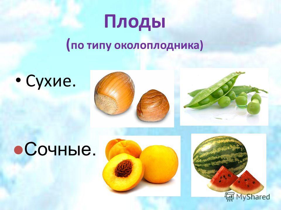 Плоды ( по типу околоплодника) Сухие. Сочные.