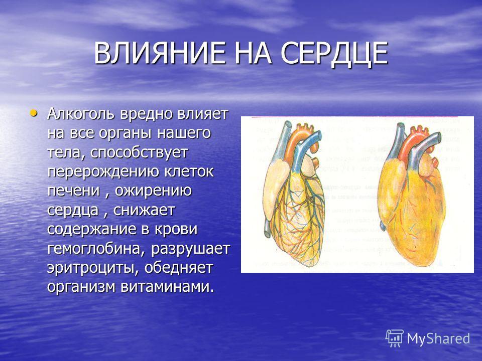 ВЛИЯНИЕ НА СЕРДЦЕ ВЛИЯНИЕ НА СЕРДЦЕ Алкоголь вредно влияет на все органы нашего тела, способствует перерождению клеток печени, ожирению сердца, снижает содержание в крови гемоглобина, разрушает эритроциты, обедняет организм витаминами. Алкоголь вредн