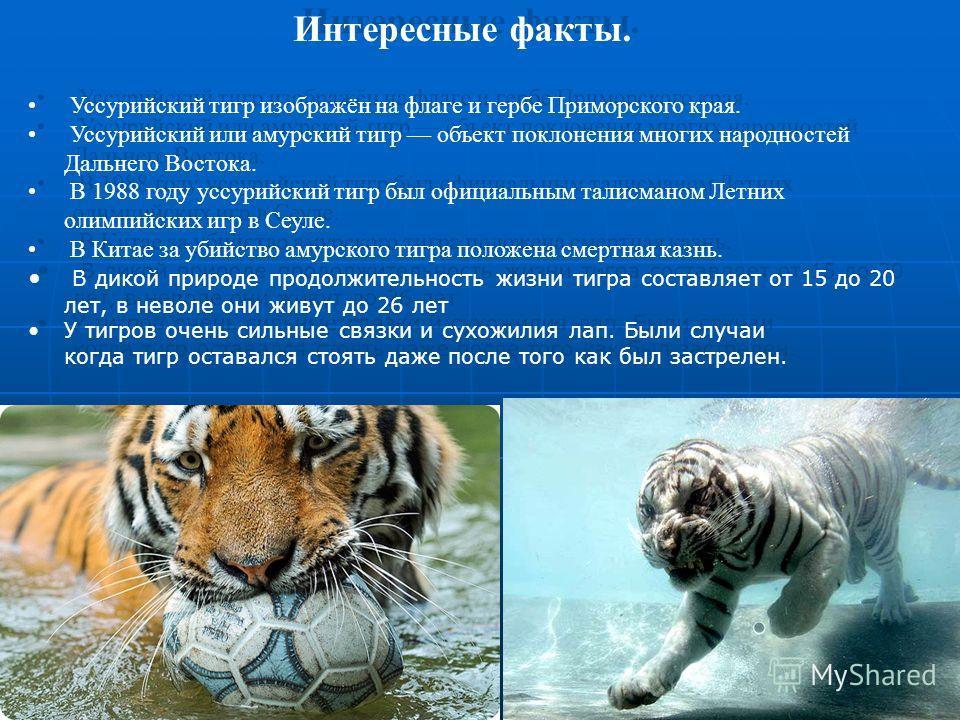 Интересные факты. Уссурийский тигр изображён на флаге и гербе Приморского края. Уссурийский или амурский тигр объект поклонения многих народностей Дальнего Востока. В 1988 году уссурийский тигр был официальным талисманом Летних олимпийских игр в Сеул